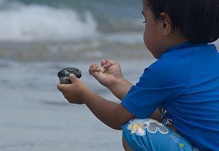Jun 14, Understanding working memory in children